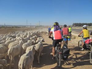 Encuentro con pastor en Cabanillas del Campo